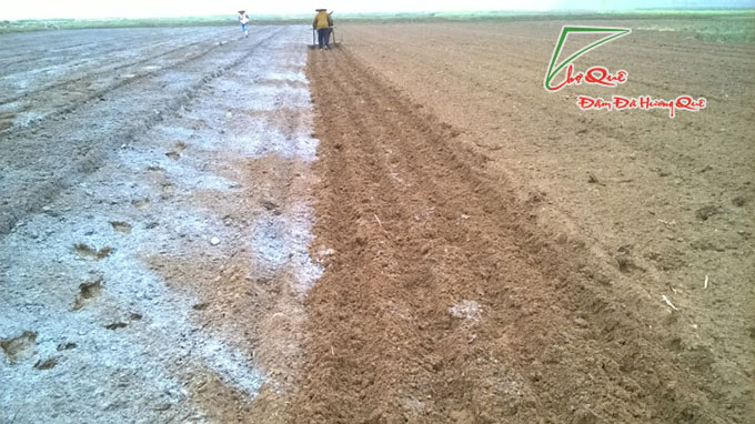Làm đất để trồng cây lá cẩm tím