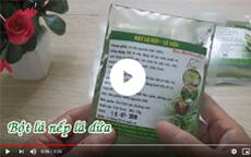 Giới thiệu về bột lá dứa Chợ Quê [video]